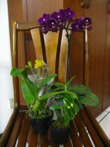 Three different types of orchids.